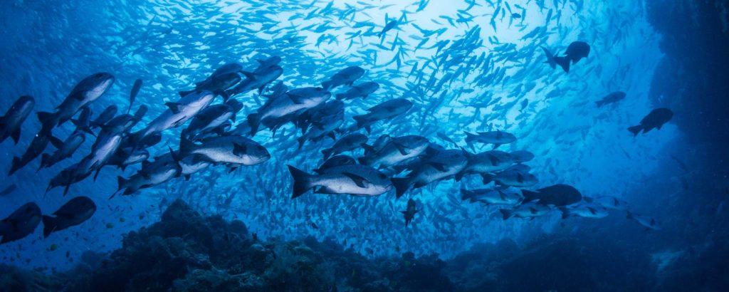 Pesca sostenibile per migliorare la competitività